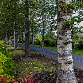 Lane by Edvald Geirsson - Nature Up Close Trees & Bushes ( reykjavík, iceland, autumn, trees, grasagarðurinn, landscape )