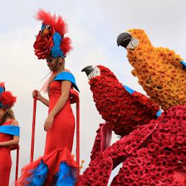 Flower Parade by Virgílio Nóbrega - People Musicians & Entertainers ( madeira island, flower festival, flower parade, flower parade in madeira, flowers )