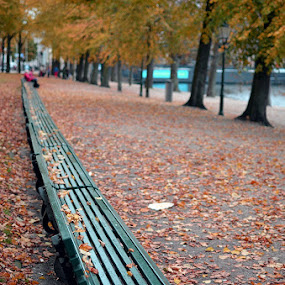 autumn851 by Herry Wibisono - City,  Street & Park  City Parks ( park, bench, autumn, fall, garden )