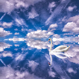 Sailing over mirrors by Bota Dorin - Digital Art Abstract ( clouds, bird, reflection, blue, beautiful, white, swan, wildlife, graceful )