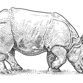 Rhino by August Rats - Illustration Animals ( stippledrawing, rhinoceros, badakjawa, rhino )