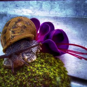 Simon by JCstudios  by John Cuthbert - Mixed Media All Mixed Media ( lol, shell, laugh, creature, art, funny, jcstudios, fun, wall art, nature, comical, slug, snail )