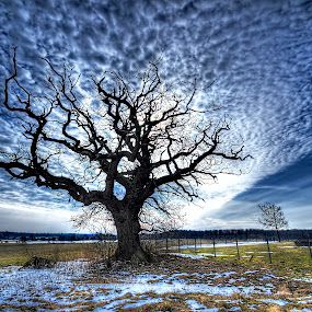 Rising! by Kim  Schou - Landscapes Cloud Formations ( clouds, kim schou, winter, oak, vesterborg, hdr, snow, white, quality, detail, landscapes, HDR, Landscapes,  )