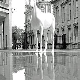 white horse by David Rose-Massom - Animals Horses ( statue, london, horse, art, cityscape, rain,  )