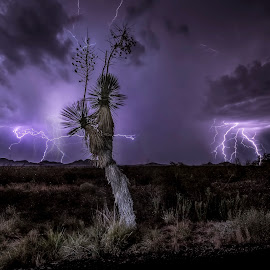 Yuca Nocturna by Rodolfo Lara - Landscapes Weather ( outdoors, nubes, rayos, desierto, nightscape )