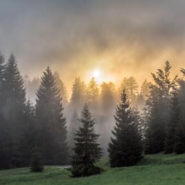 Forest haze by Stanislav Horacek - Landscapes Prairies, Meadows & Fields