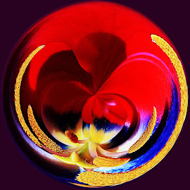 The Twisted Tulip by Len  Janes - Digital Art Abstract ( twisted, bulb, tulip, perspective, seedsa, garden, flower, colours )
