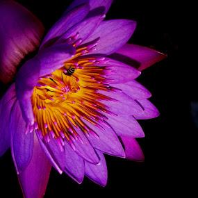 by Deepti Rokade - Flowers Single Flower (  )