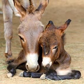 True Love.... by Ann Bjerring Ravn Weis - Animals Other (  )