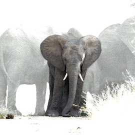 Roadworks by Bjørn Borge-Lunde - Digital Art Animals ( wild animal, elephants, wilderness, animals, nature, wildlife, africa )