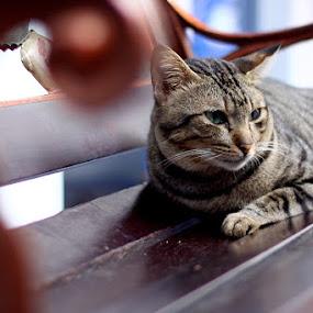 Still waiting it's owner by Zlatan Dawamovic - Animals - Cats Portraits