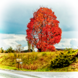 autumn in the country by Lennie Locken - Nature Up Close Trees & Bushes