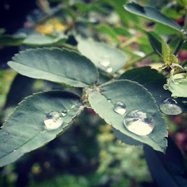 Water Drops by Kushagra Jha - Instagram & Mobile Android