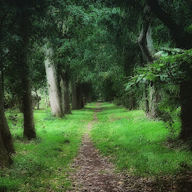 by Tracy Taylor - Landscapes Forests