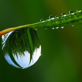 Nature Dew by Muhamad Lazim - Nature Up Close Natural Waterdrops ( water drops, macro photography, dew )