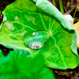 A drop of water on a leaf by Rogerio Ribas - Nature Up Close Water