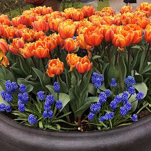 flori in flori amsterdam.JPG