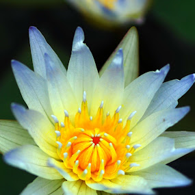 lily white... by Awai Bucchi - Nature Up Close Flowers - 2011-2013