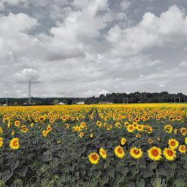 by Vinny Fotos - Landscapes Prairies, Meadows & Fields