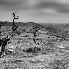 Into The Valley by Barry Smith - Black & White Landscapes ( nature, monochrome, black and white, trees, landscape )