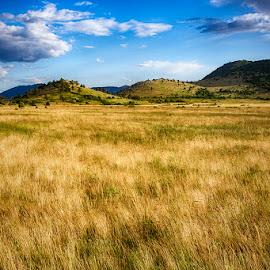 Fields of gold by Antonio Stipinovic - Landscapes Prairies, Meadows & Fields ( contrast, field, hills, croatia, golden )