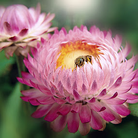 by Ksenija Glavak - Flowers Flowers in the Wild (  )