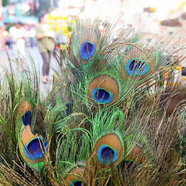 Peacock Feathers in Little India  by Abdul Salim - Artistic Objects Other Objects