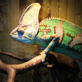 by Yasminh Ramadan - Animals Reptiles