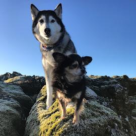 Sisters  by Bjarklind Þór - Animals - Dogs Portraits