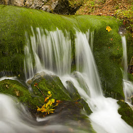 Moss by Janez Smitek - Landscapes Waterscapes ( autumn, slovenia, waterfall, moss, leaves, spring, river )