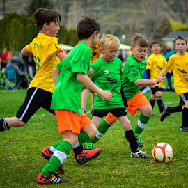 Anyone's Ball by Garry Dosa - Sports & Fitness Soccer/Association football ( teams, ball, boys, sports, action, children, game, spring, running, soccer )