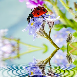 Ladybird, ladybird fly away... by Len  Janes - Digital Art Animals ( gotas, water drops, flying colors, fly, spin, ladybird, ladybug, whirlpool, colours, droplets )