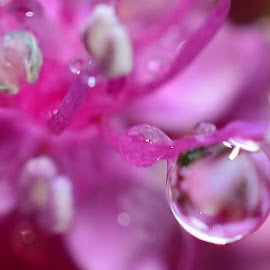 purple droplets  by Eloise Rawling - Nature Up Close Natural Waterdrops ( purples, raindrops, flower )