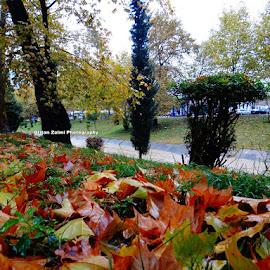 by Dritan Zaimi - City,  Street & Park  City Parks
