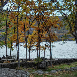 Otoño by Jose Maria Vidal Sanz - Landscapes Travel ( nature, autumn, trees )