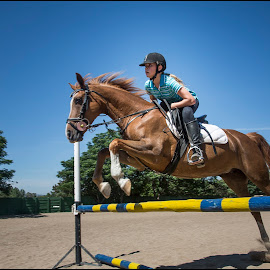 by Adrian Chinery - Sports & Fitness Other Sports ( equine, speed, johannesburg, south africa, portfolio, horse, sport, equestrian, portrait, child, rider, saddle, transport, photographer, fourways, high, showjumping )