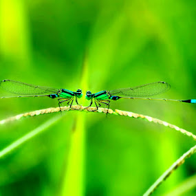 by Hendra Afriansyah - Novices Only Macro