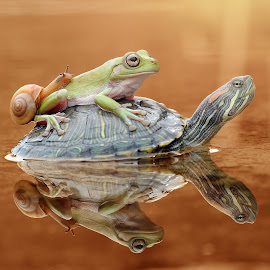 Frog, Turtle, Snail, by Andri Priyadi - Animals Amphibians ( snails, animals, frog, nikkor, amphibian, turtles, turtle, amphibians, nikon d90, macro, indonesia, nikon, snail, frogs, animal )