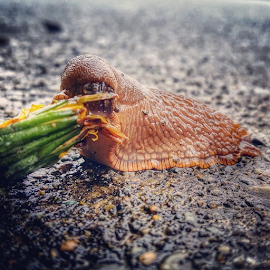 the by Todd Reynolds - Instagram & Mobile Android ( pacificnorthwest, mascot, slug )