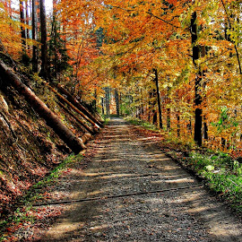 by Karel Šula - Uncategorized All Uncategorized ( autumn )