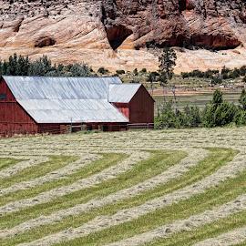 1st Hay Cutting by Jim Buckley - Landscapes Prairies, Meadows & Fields ( farm, barn, hay, landscape )