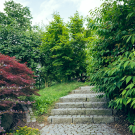 Stairs in the garden by Denny Gruner - City,  Street & Park  City Parks ( plant, curve, direction, stone, way, leaf, botanical, spring, decor, tranquil, stairs, stairway, nature, path, walkway, peaceful, pathway, park, blooming, green, landscaping, rural, environment, outdoor, summer, gardening, natural, garden, outside, step )