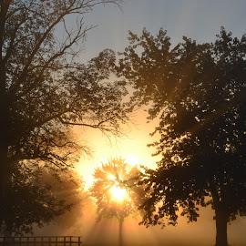 The explosive sunrise by Thomas Fitzrandolph - Landscapes Sunsets & Sunrises ( sunrises, nikon d3100, nature, niagara county ny, trees, morning, lockport ny, sun )