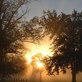 The explosive sunrise by Thomas Fitzrandolph - Landscapes Sunsets & Sunrises ( sunrises, nikon d3100, nature, niagara county ny, trees, morning, lockport ny, sun,  )