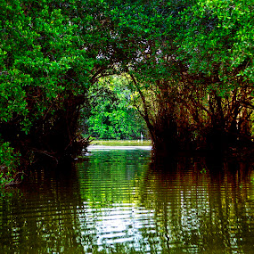 WAter and trees by Cristobal Garciaferro Rubio - Nature Up Close Trees & Bushes ( water, reflection, trees, leaves, egret )