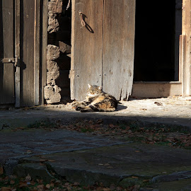 Walensee, St Gallen, Switzerland by Serguei Ouklonski - Animals - Cats Portraits ( cat, wood, no person, door, st gallen, architecture, travel, house, cats, sky, autumn, animals in the wild, shadow, no people, pets, switzerland, feline, light, building, wood - material, one animal, sunlight, domestic animals, mammal, roof, season, outdoors, animal themes, day, town, built structure, wall, daylight, domestic cat )