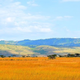 Predatory Behaviour by Ian Mlawi - Landscapes Prairies, Meadows & Fields