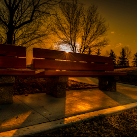Millwood City Park by Joseph Law - City,  Street & Park  City Parks ( millwood, benches, morning glory, trees, sunshine, edmonton, city park, shadows )