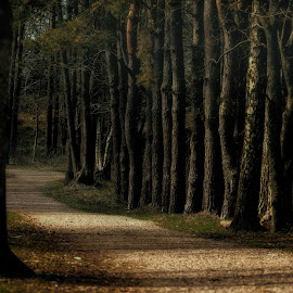 Early morning on the path by Peter Björklund - Landscapes Forests ( relax, tranquil, relaxing, tranquility )