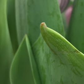 green by Jenny Warrick - Nature Up Close Leaves & Grasses (  )